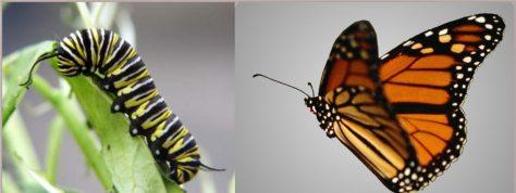 cropped-butterfly.jpg