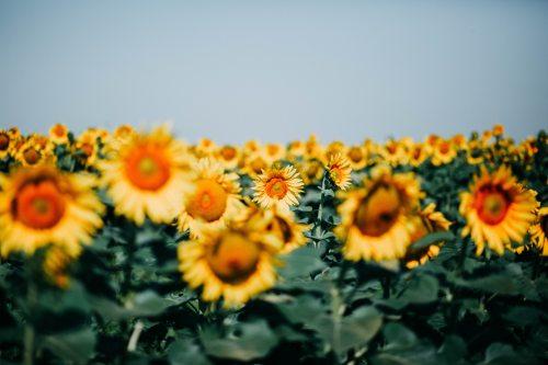 bloom-blossom-depth-of-field-1223012.jpg
